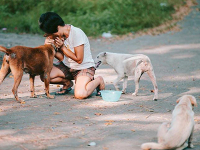 HELP HOMELESS HUNGRY DOGS IN BALI